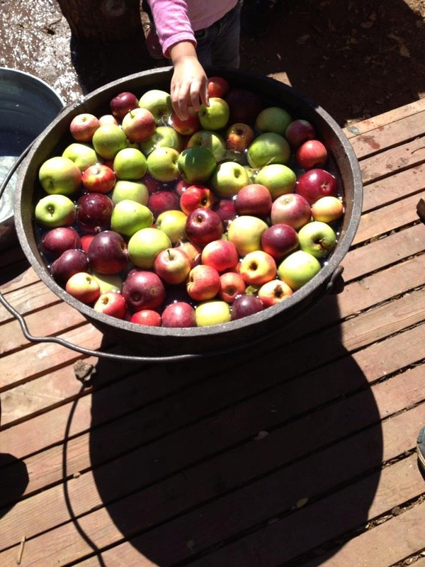 Apple picking at Fortcross Wilderness Education