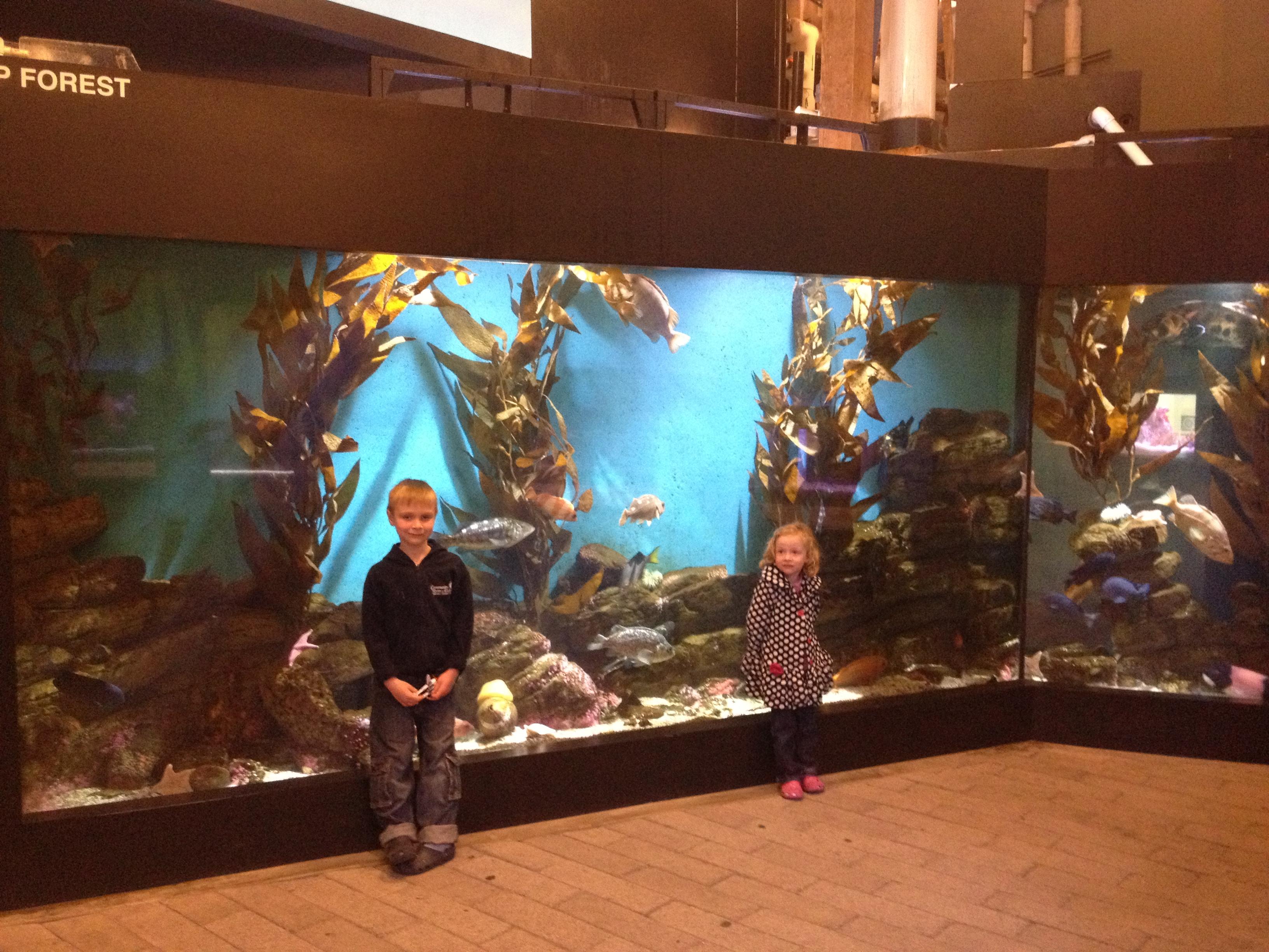 A Visit To The Cabrillo Marine Aquarium In San Pedro